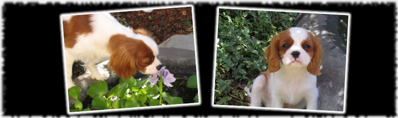 Photos of Snickers enjoying flowers, and as a puppy